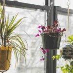 Comment arroser les plantes avec du cafe ?