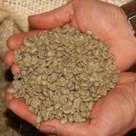 Comment est fabriqué le café décaféiné ?