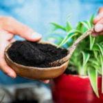 Comment utiliser le marc de café pour le jardin ?