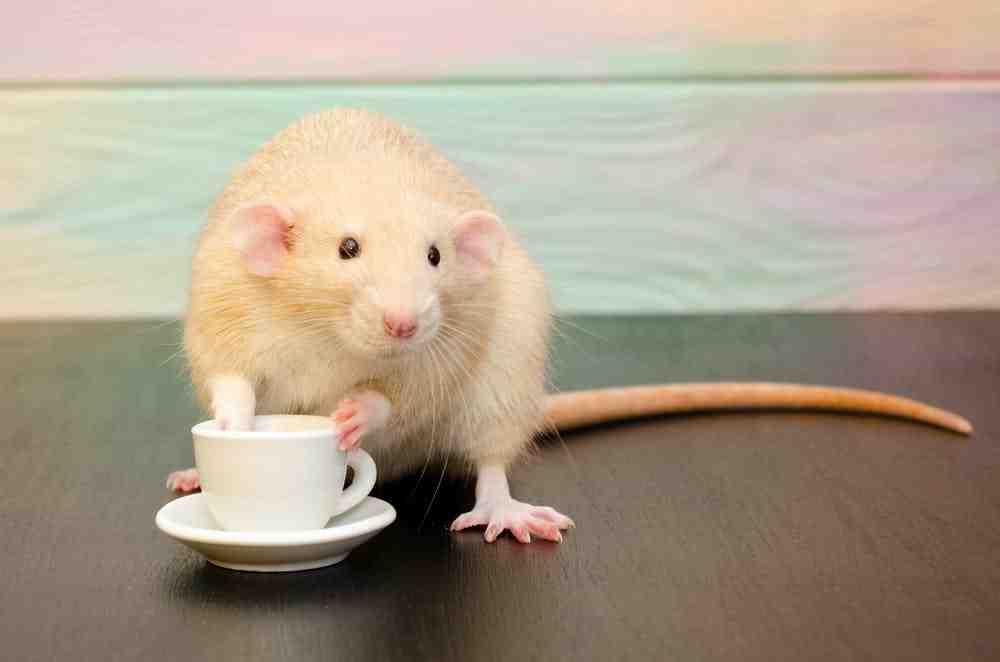 Pourquoi le cafe nous empeche-t-il de dormir ?