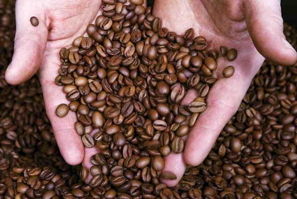 Quel est le meilleur café Robusta ou Arabica?