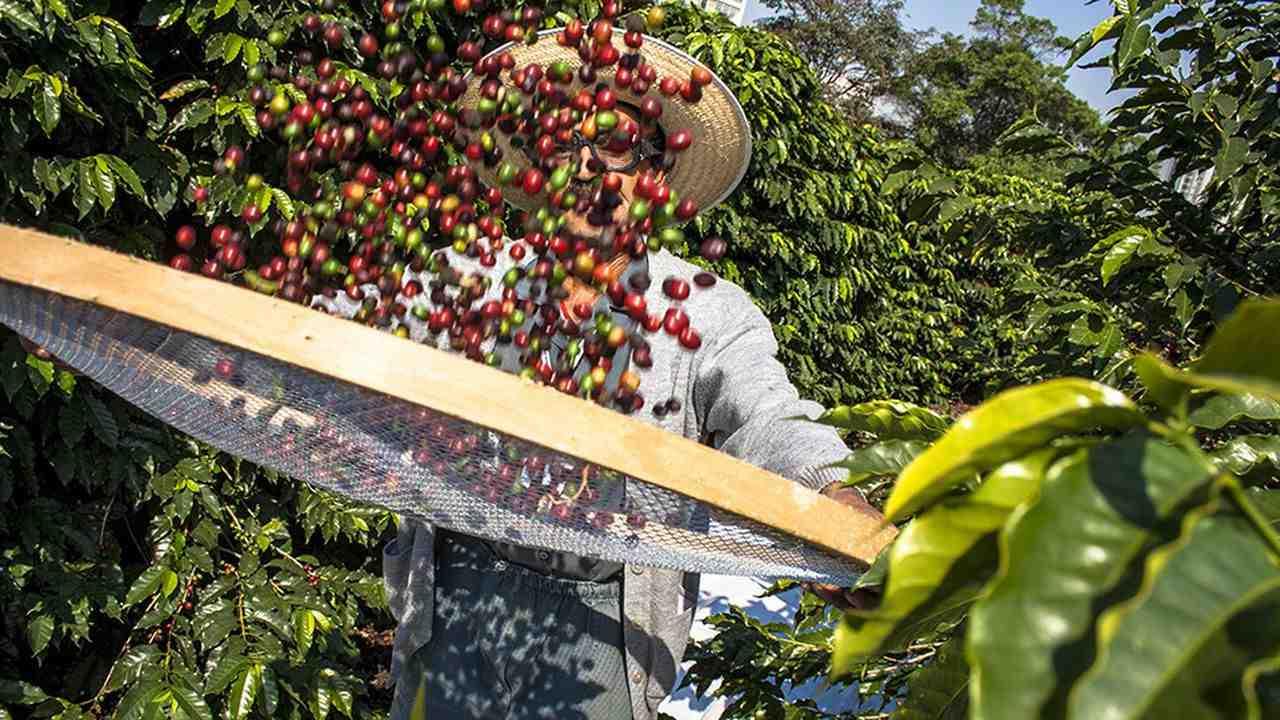 Quelle est la place du café dans le commerce mondial?