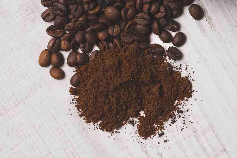 Quelles plantes aiment le marc de café?