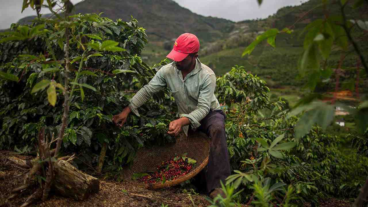 Qui produit le plus grand café du monde?